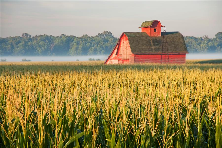 Discover Original Art by Abhi Ganju | Red Barn in Midwest Cornfield photography | Art for Sale Online at UGallery