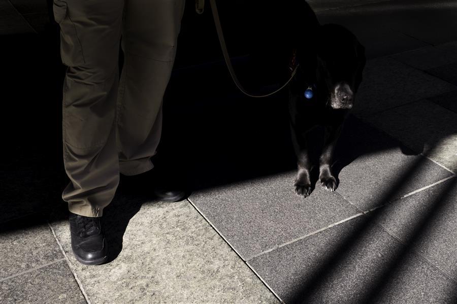 Original art for sale at UGallery.com | Manhattan Dog by RICARDO PERINI | $150 |  | ' h x ' w | http://www.ugallery.com/photography-manhattan-dog