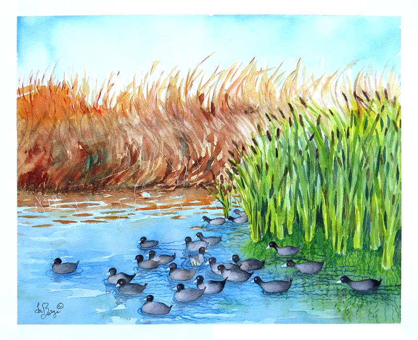 Original art for sale at UGallery.com | Adventurous American Coots by NANCY MUREN | $450 | Watercolor painting | 15' h x 19' w | http://www.ugallery.com/watercolor-painting-adventurous-american-coots