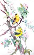 Impressionism art,Animals art,Representational art,watercolor painting,American Goldfinch and Apple Blossom