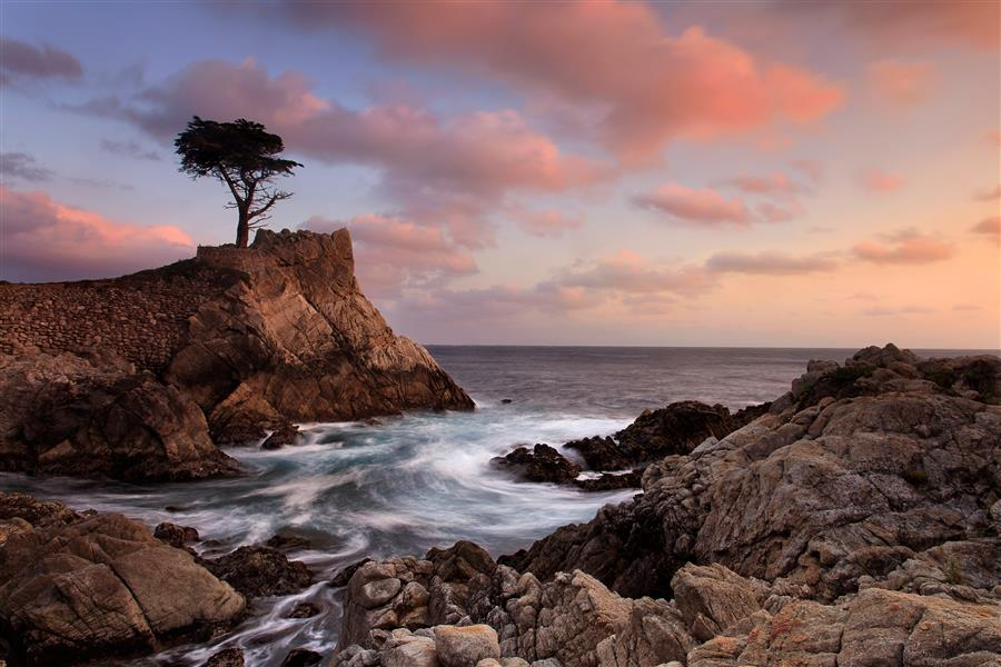 Original art for sale at UGallery.com | Lone Cypress Sunset by KATHERINE GENDREAU | $195 |  | ' h x ' w | http://www.ugallery.com/photography-lone-cypress-sunset