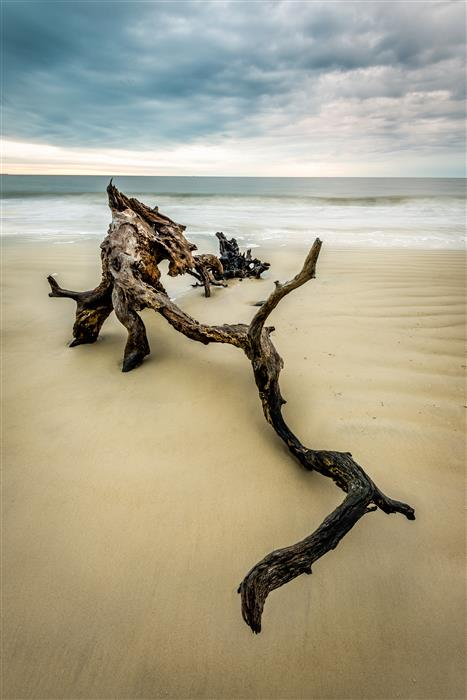 Discover Original Art by Mike Ring | Driftwood Beach 2  photography | Art for Sale Online at UGallery