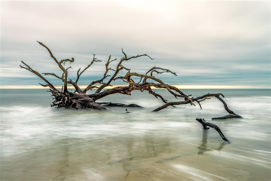 Discover Original Art by Mike Ring | Driftwood Beach 3 photography | Art for Sale Online at UGallery