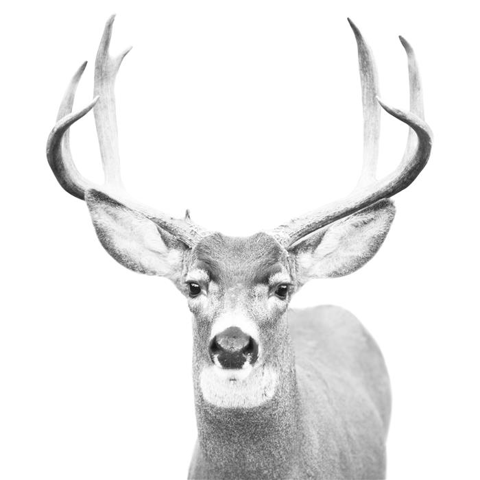 Original art for sale at UGallery.com | Buck by STEPHANIE SHERMAN | $185 |  | ' h x ' w | http://www.ugallery.com/photography-buck