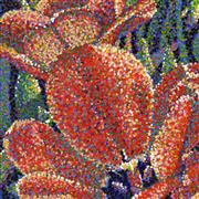Impressionism art,Flora art,Representational art,acrylic painting,Tulip Twinkle