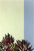 Still Life art,Flora art,Representational art,Modern  art,drawing artwork,Spikes 3