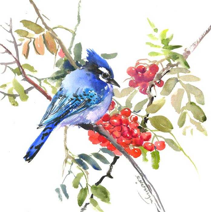 Discover Original Art by Suren Nersisyan | Blue Jay and Rowan watercolor painting | Art for Sale Online at UGallery