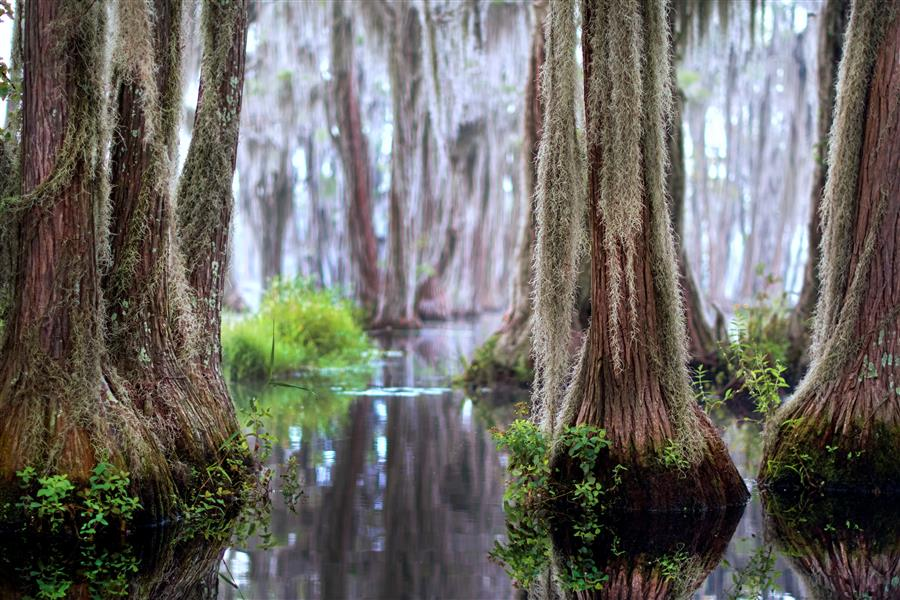 Original art for sale at UGallery.com | Daybreak Among the Cypress Trees by NOELLE VISCONTI | $145 |  | ' h x ' w | http://www.ugallery.com/photography-daybreak-among-the-cypress-trees