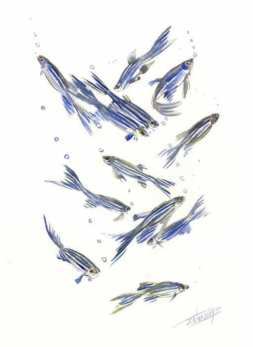 Discover Original Art by Suren Nersisyan | Danio, Zebrafish watercolor painting | Art for Sale Online at UGallery