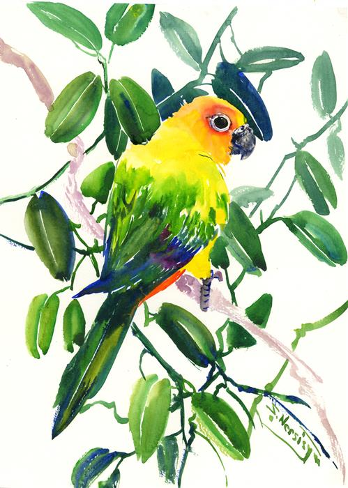 Discover Original Art by Suren Nersisyan | Sun Conure Parakeet and Hoya watercolor painting | Art for Sale Online at UGallery