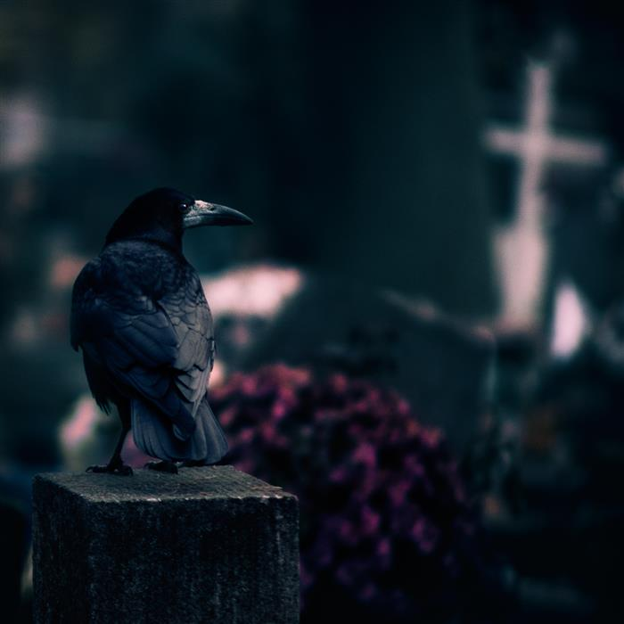 Discover Original Art by Rafal  Kijas | Cemetery photography | Art for Sale Online at UGallery