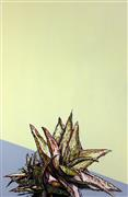 Pop art,Flora art,Representational art,Modern  art,drawing artwork,Spikes 6