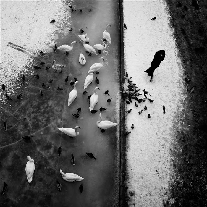 Discover Original Art by Rafal  Kijas | Woman and Swans photography | Art for Sale Online at UGallery