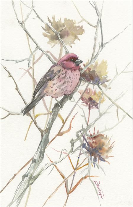 Discover Original Art by Suren Nersisyan | House Finch in the Field (Vertical) watercolor painting | Art for Sale Online at UGallery