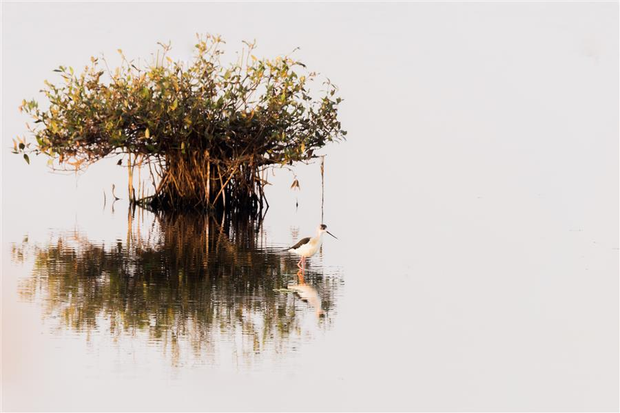 Discover Original Art by Sarang Bhand   Habitat photography   Art for Sale Online at UGallery