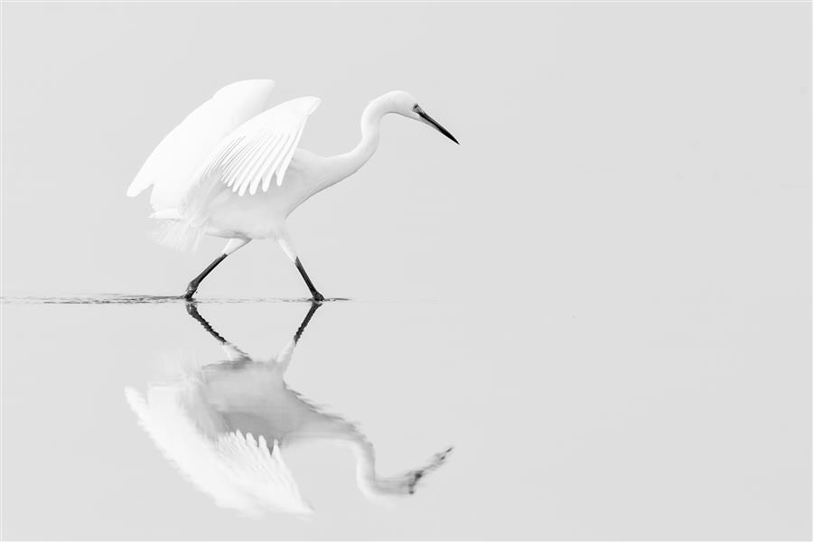 Discover Original Art by Sarang Bhand   Little Egret photography   Art for Sale Online at UGallery